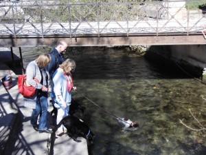 川で泳ぐのは鴨だけではない
